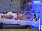 2008年10月15日小貝比出生:IMG_0019.JPG
