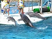 2010.07.25野柳海洋公園:IMG_1003.JPG
