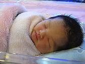 2008年10月15日小貝比出生:IMG_0029.JPG