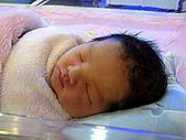 2008年10月15日小貝比出生:IMG_0030.JPG