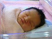 2008年10月15日小貝比出生:IMG_0031.JPG