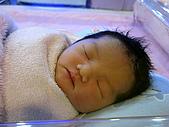 2008年10月15日小貝比出生:IMG_0035.JPG