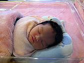 2008年10月15日小貝比出生:IMG_0037.JPG