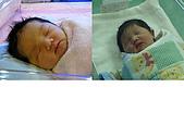 2008年10月15日小貝比出生:姐弟照
