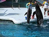 2010.07.25野柳海洋公園:IMG_1009.JPG