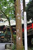 溪頭&松林町(妖怪村):IMG_9192.jpg
