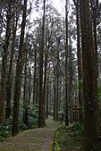 溪頭&松林町(妖怪村):IMG_9266.jpg