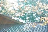 2009.11.20  福壽山農場:DSC_4979.jpg