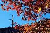 2009.11.20  福壽山農場:DSC_5034.jpg