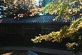 2009.11.20  福壽山農場:DSC_4985.jpg