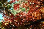 2009.11.20  福壽山農場:DSC_5050.jpg