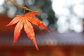 2009.11.20  福壽山農場:DSC_4993.jpg