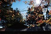 2009.11.20  福壽山農場:DSC_5014.jpg