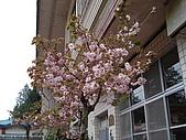 2009阿里山櫻花季:DSC01390.jpg
