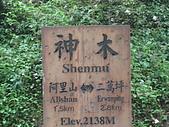 2009阿里山櫻花季:DSC01426.jpg