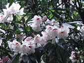 2009阿里山櫻花季:DSC01429.jpg