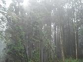 2009阿里山櫻花季:DSC01419.jpg