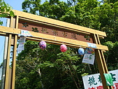 失望的桐花祭:DSC01272.JPG