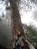 2009阿里山櫻花季:DSC01417.jpg