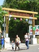 失望的桐花祭:DSC01508.JPG