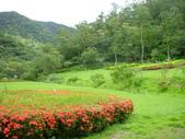 雙流國家森林遊樂區20110729:陽光草坪