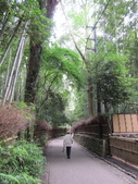 日本京都自助20150615(二)–嵐山竹林小徑、野宮神社:嵐山竹林小徑