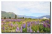 深白色夏戀Ⅴ 紐西蘭 New Zealand Day5 :s_IMG_0734