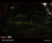 2014 東勢林場螢火蟲:s_IMG_5327.jpg
