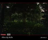 2014 東勢林場螢火蟲:s_IMG_5328.jpg