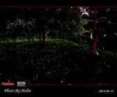 2014 東勢林場螢火蟲:s_IMG_5332.jpg