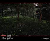 2014 東勢林場螢火蟲:s_IMG_5333.jpg