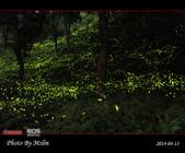 2014 東勢林場螢火蟲:s_IMG_5340.jpg