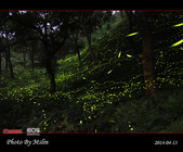2014 東勢林場螢火蟲:s_IMG_5345.jpg