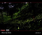 2014 東勢林場螢火蟲:s_IMG_5346.jpg
