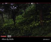 2014 東勢林場螢火蟲:s_IMG_5347.jpg