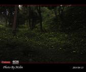 2014 東勢林場螢火蟲:s_IMG_5350.jpg