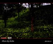 2014 東勢林場螢火蟲:s_IMG_5353.jpg