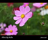 2010 Blog:s_IMG_8764.jpg