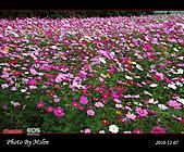 2010 Blog:s_IMG_8766.jpg