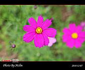 2010 Blog:s_IMG_8770.jpg