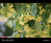 2014 德奧親子遊Day 1~2 (6/13~14):s_IMG_7485.jpg