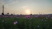 嘉義2011花海:P1210813.JPG