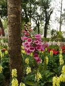 2012 台南公園 百花節 :P1290712.JPG