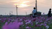 嘉義2011花海:P1210837.JPG