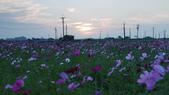 嘉義2011花海:P1210841.JPG