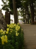 2012 台南公園 百花節 :P1290745.JPG
