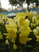 2012 台南公園 百花節 :P1290754.JPG