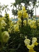 2012 台南公園 百花節 :P1290768.JPG