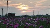 嘉義2011花海:P1210852.JPG