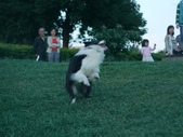 手動鏡頭 拍動態貓、狗:P1130884.JPG